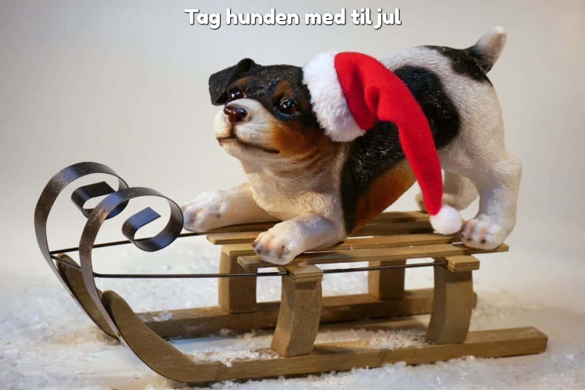 Tag hunden med til jul